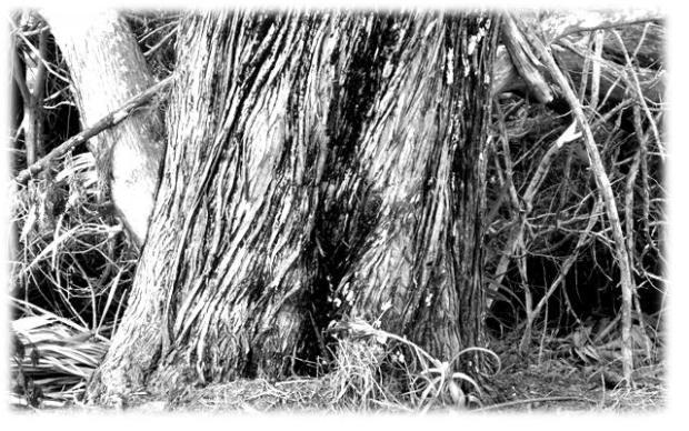 Photography - Black & White #2