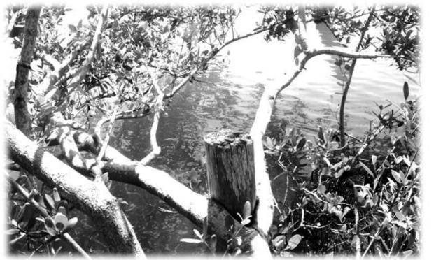 Photography - Black & White #3