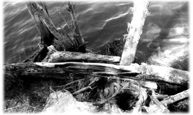 Photography - Black & White #4
