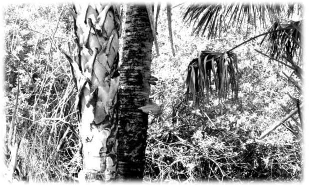 Photography - Black & White #5