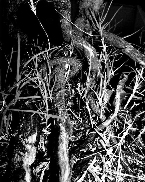 Photography - Black & White #10