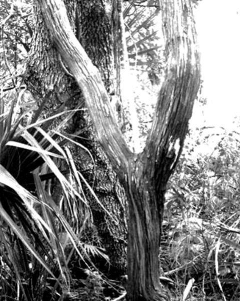 Photography - Black & White #11
