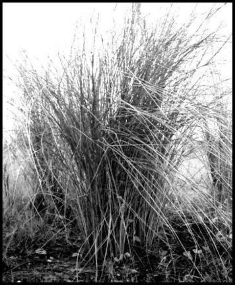 Photography - Black & White #12