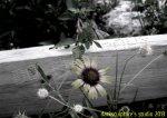 100_0001 - DISPLAY IMAGE
